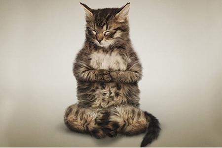 Смешные рисунки про кошек и собак
